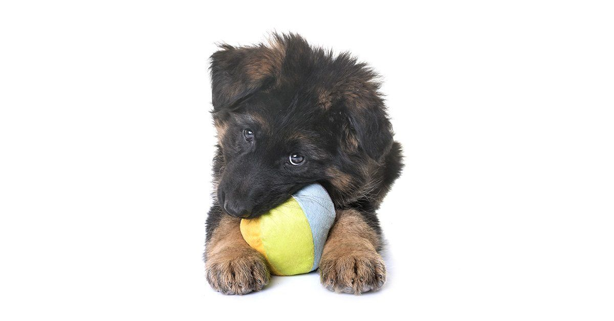 Losing Baby Teeth Things You Can Do To Help Your Dog Puppy