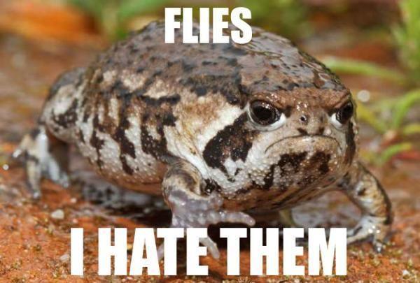 Grumpy Frog