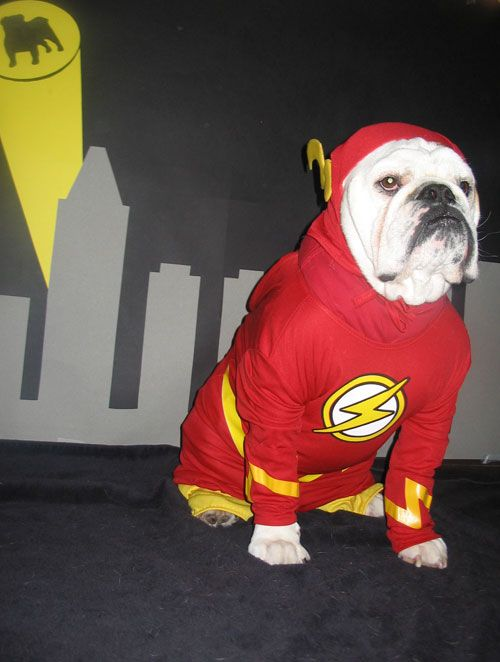 Halloween Photo Contest Wilshire As Flash Dog Halloween