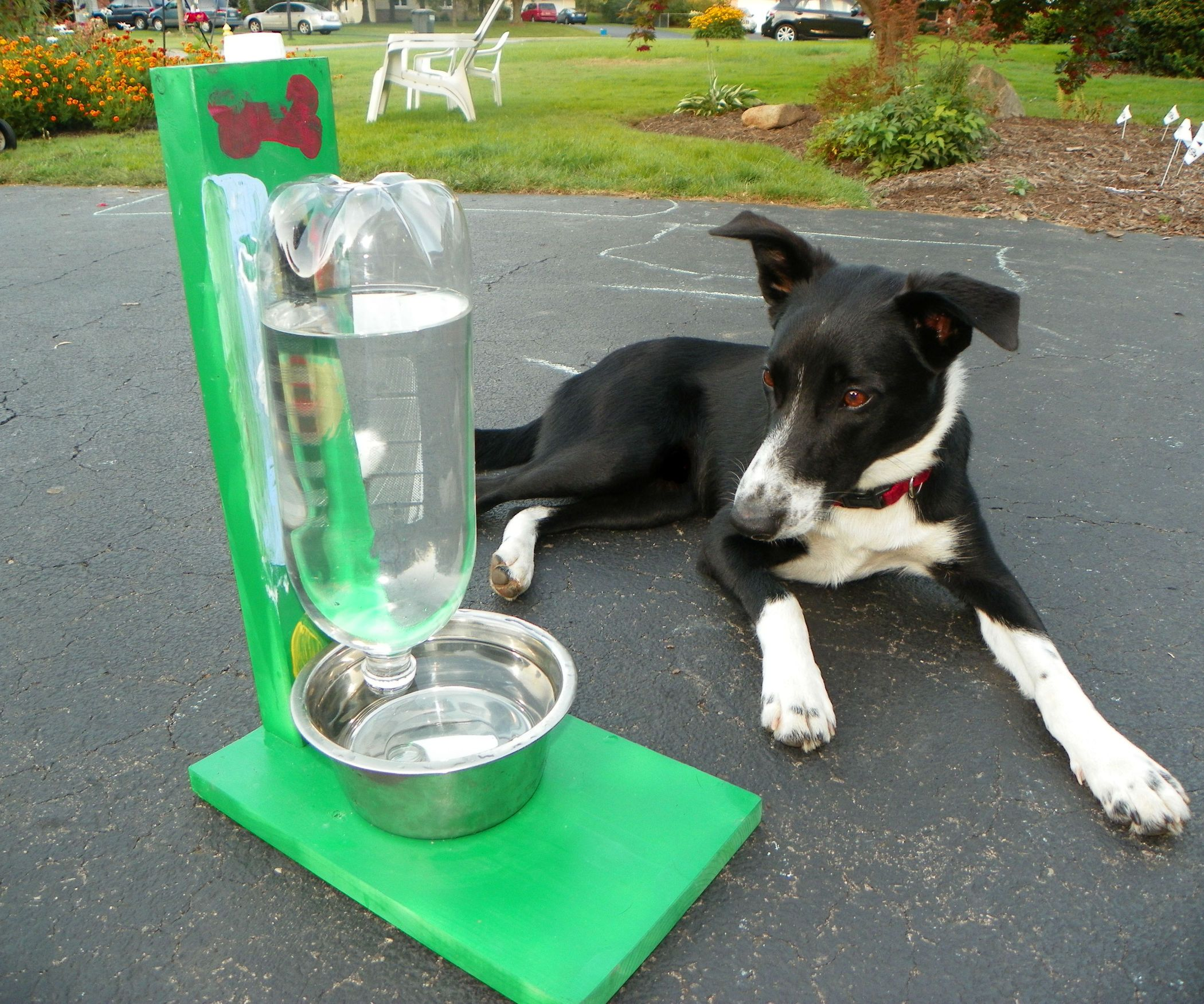 The Awesomest Coolest Easiest Water Bowl for DOGS & CATS