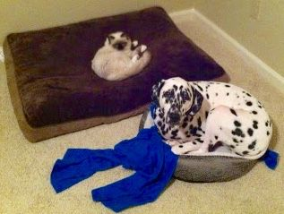 Small Cat In Big Bed Big Dog In Small Bed Funny Animals Cute