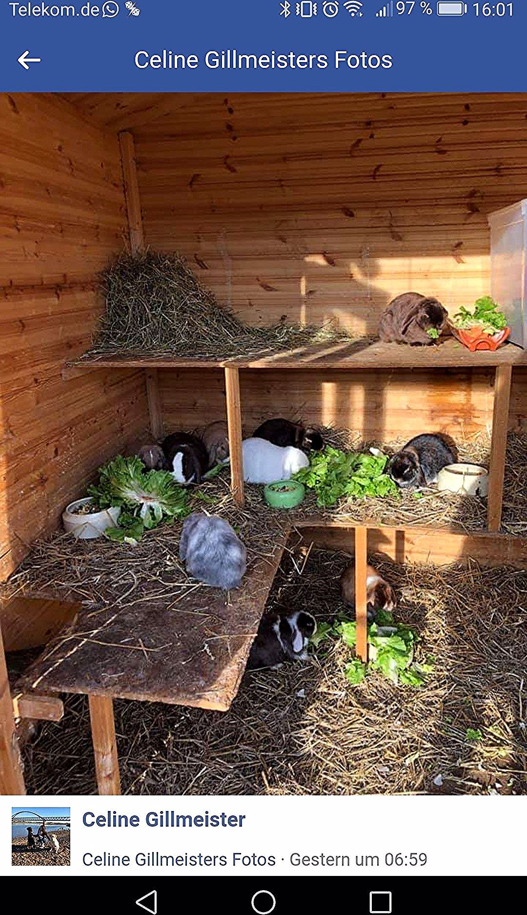 Pin By Johbohede On Kanin In 2020 Rabbit Enclosure Bunny Rabbit Crafts Rabbit Hutches