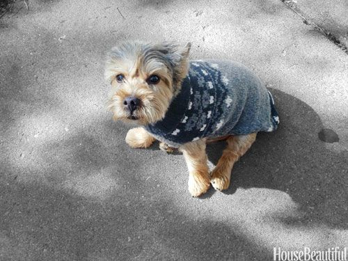 Hand-Knit Sweater on Petey, Anne Coyle's pet.