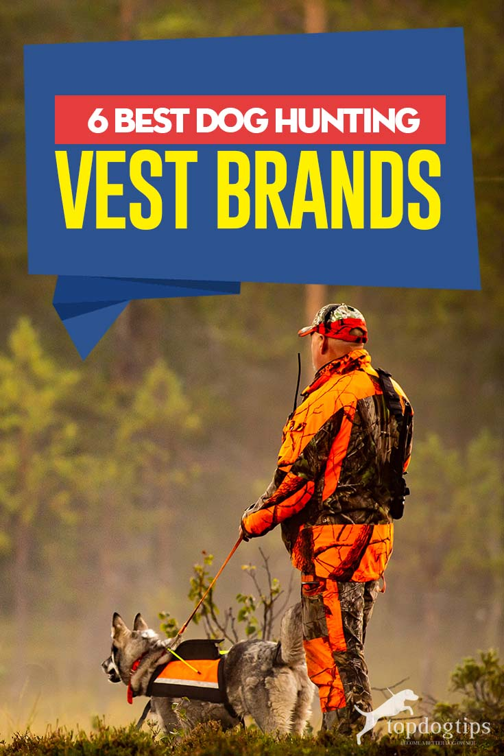 6 Best Hunting Dog Vests Dog hunting vest, Dog vests