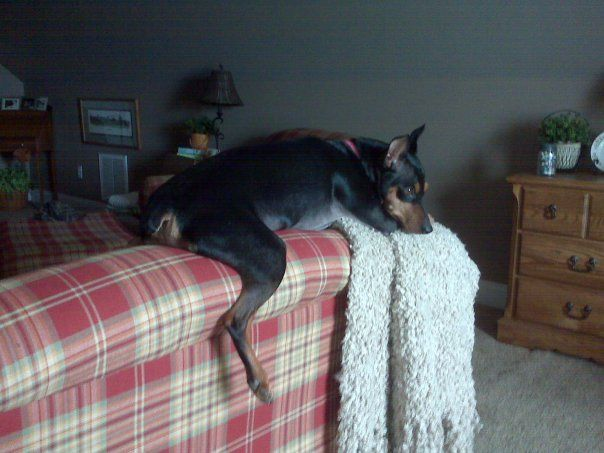 My sweet little girl her hanging out place...