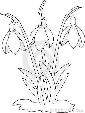 How To Draw Snowdrops Google Search Flower Drawing Floral Art Design Colouring Pages