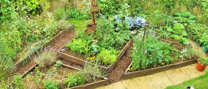 収穫も愉しめる美しい庭園 ポタジェガーデン 基本のき 庭の