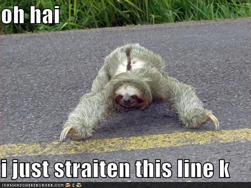 oh hai i just straiten this line k / lolcats