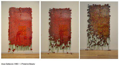 Anya Gallacio | Preserve 'beauty', 1991-2003