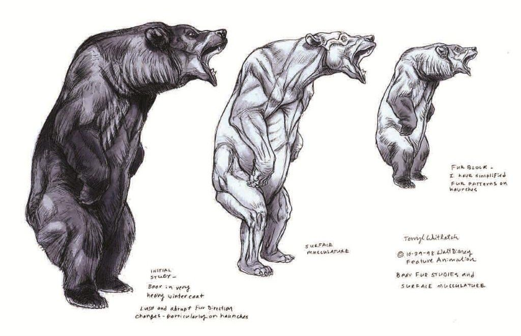159d2a6273681a9dc79b61ea4bfd95c1 bear anatomy drawing tips pinterest anatomy, bears and