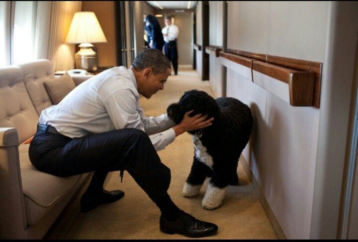 Mr. President and Bo