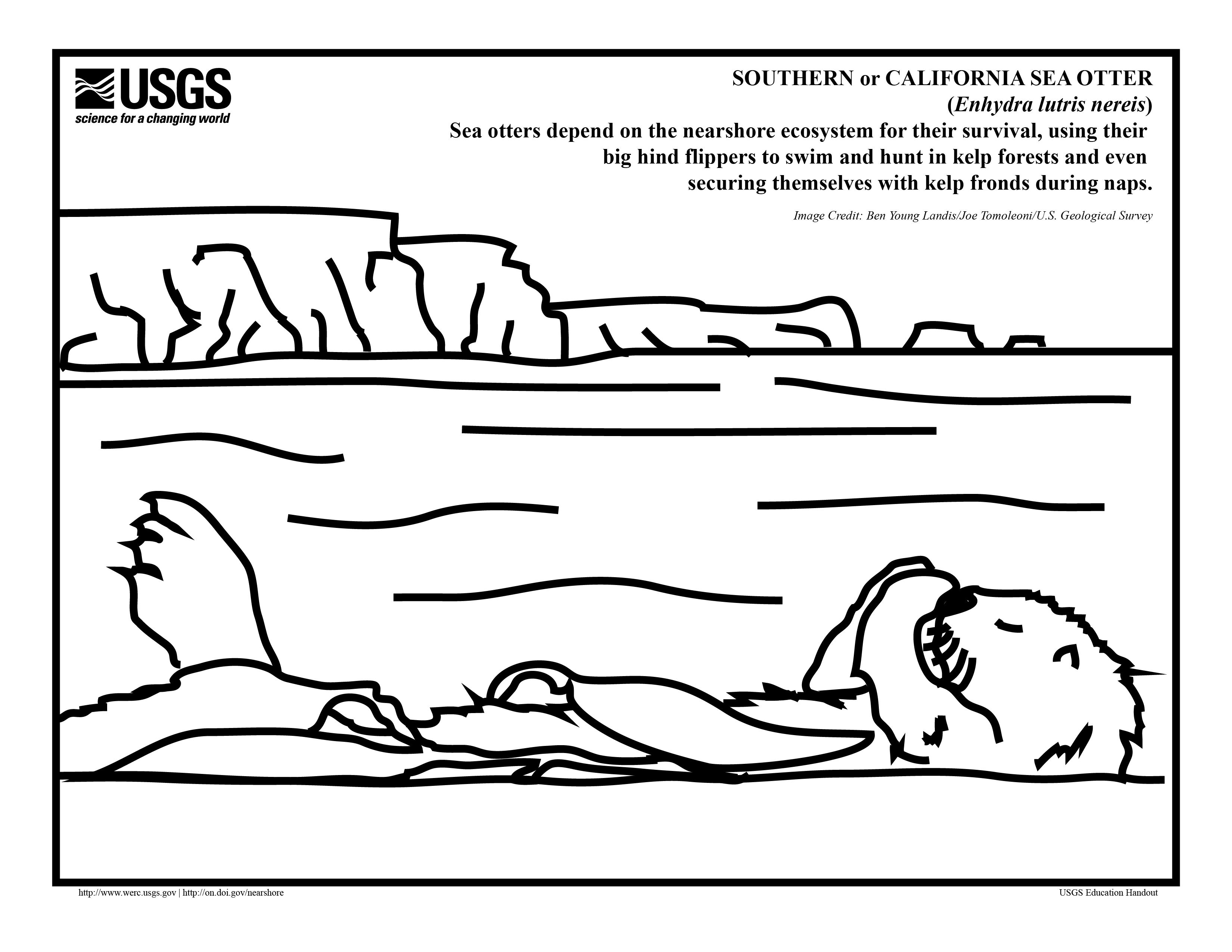 A Sea Otter Coloring Page For The Pups In Your Life Otterly