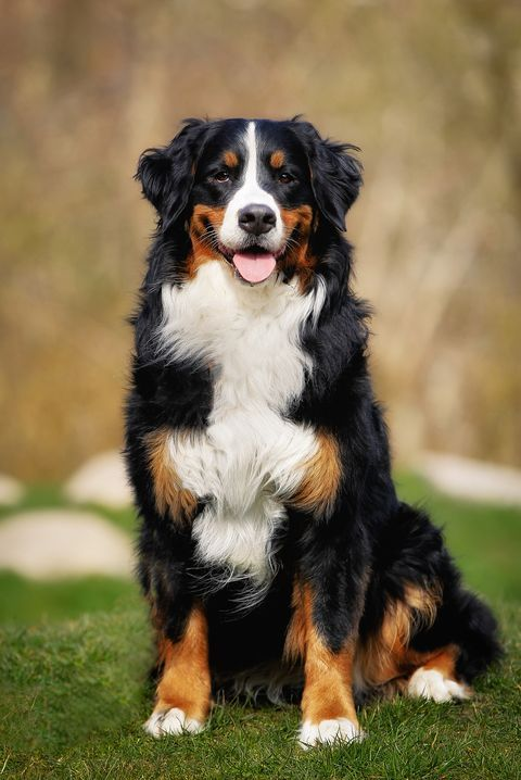 These Are Best Dogs For Kids And Families According To The