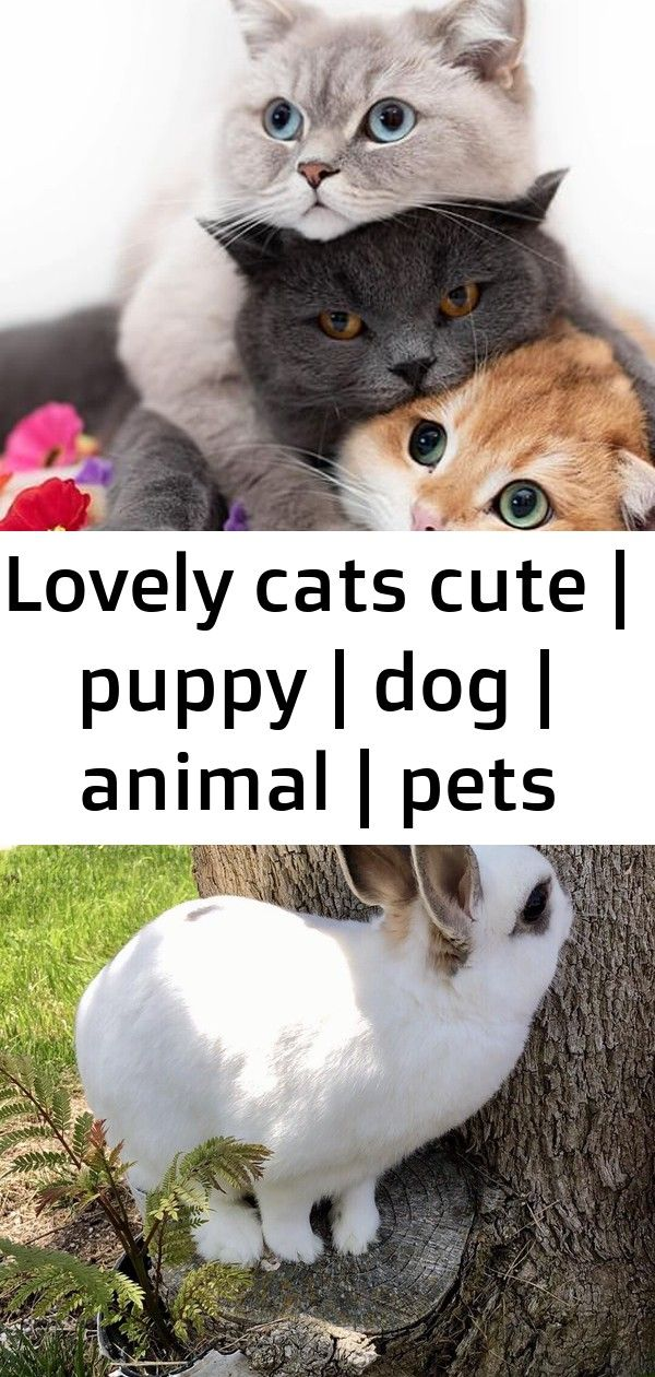 Lovely cats cute puppy dog animal pets Cute