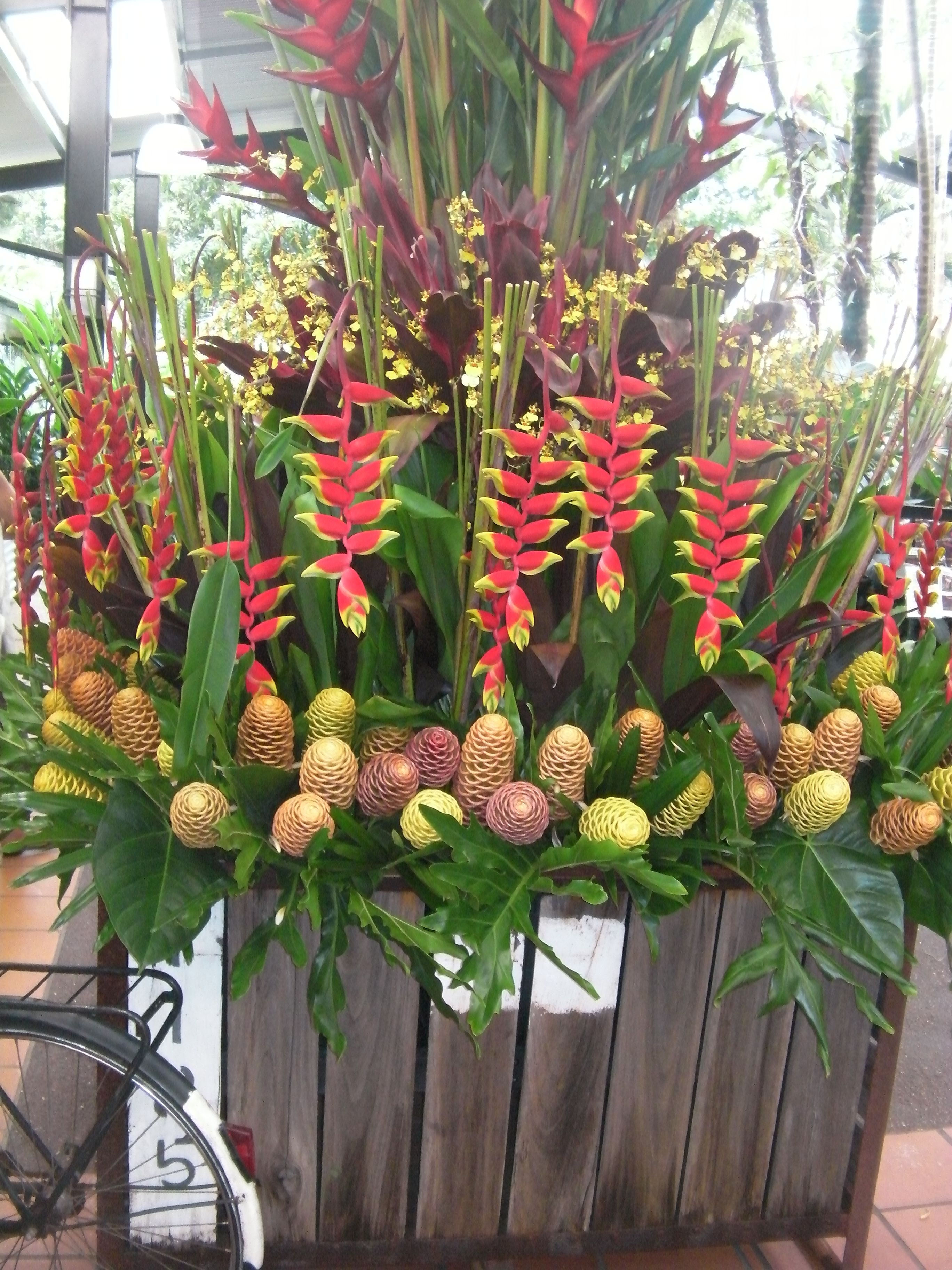 Yandina Ginger And Flower Festival Parrot Beak Heliconia And Bee Hive Gingers Heliconias