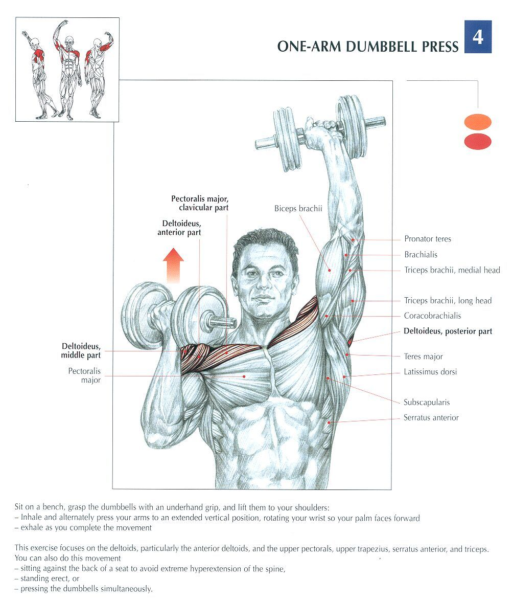 one-arm dumbbell press | Anatomy and Physiology | Pinterest | Arms ...