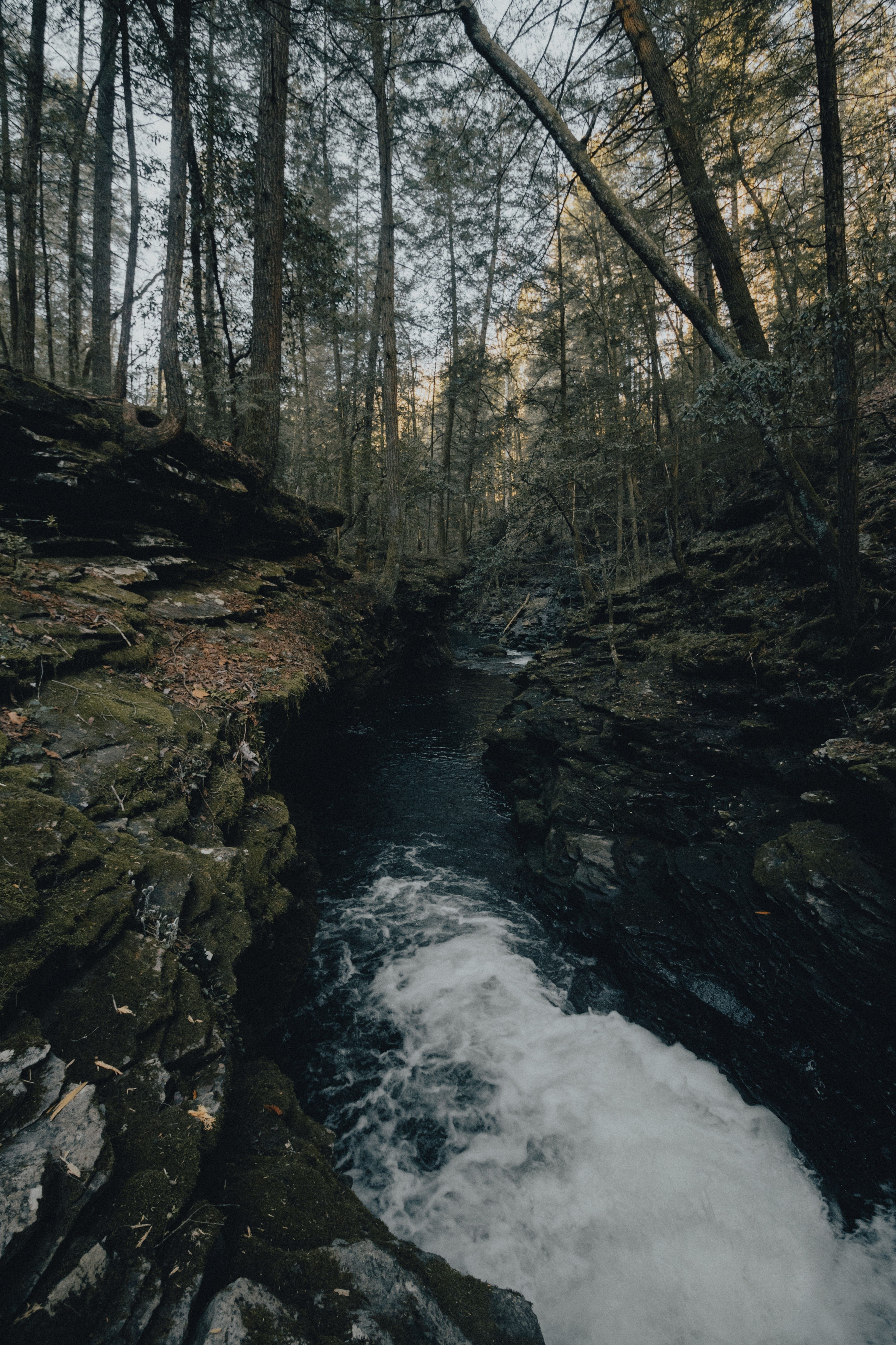 Fiery Gizzard Trail Sequatchie United States Landscape Photography Of Forest And River D9e0e4 Make Photography Landscape Photography Landscape Nature