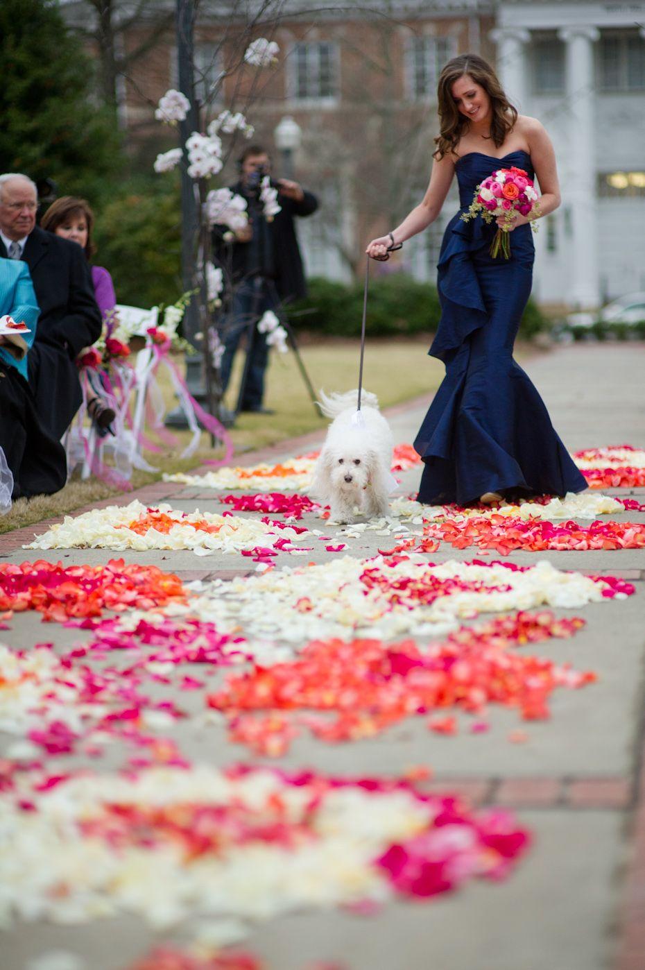 Dog+walking+down+aisle+at+wedding