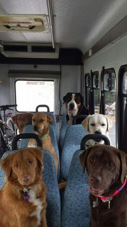 Dog Bus Funny Dog Faces Cute Dogs Animals