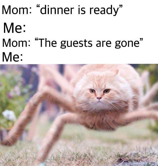 Twenty-Three Animal Memes Because, Well, They're B