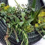 Hanging Succulent Basket