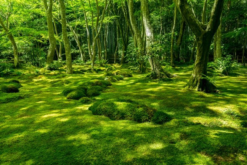 Moss Grab Bag In 2020 With Images Japanese Garden