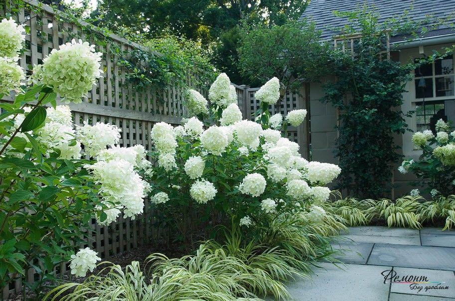 Красивые растения очень украшают ландщафтный дизайн