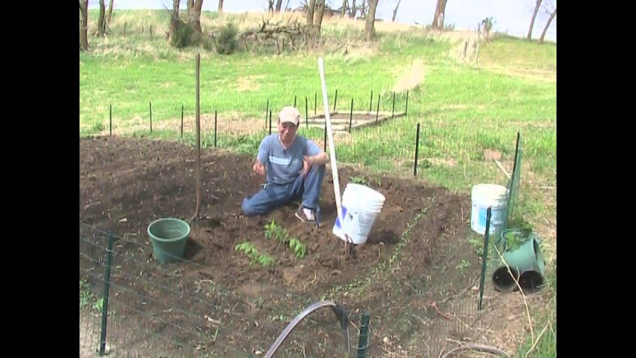 Praxxus Method Planting Demo Deep Planting Tomato Bell 400 x 300