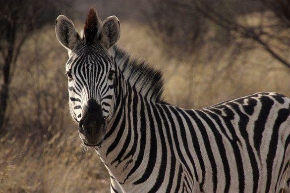 Safari Khama Rhino