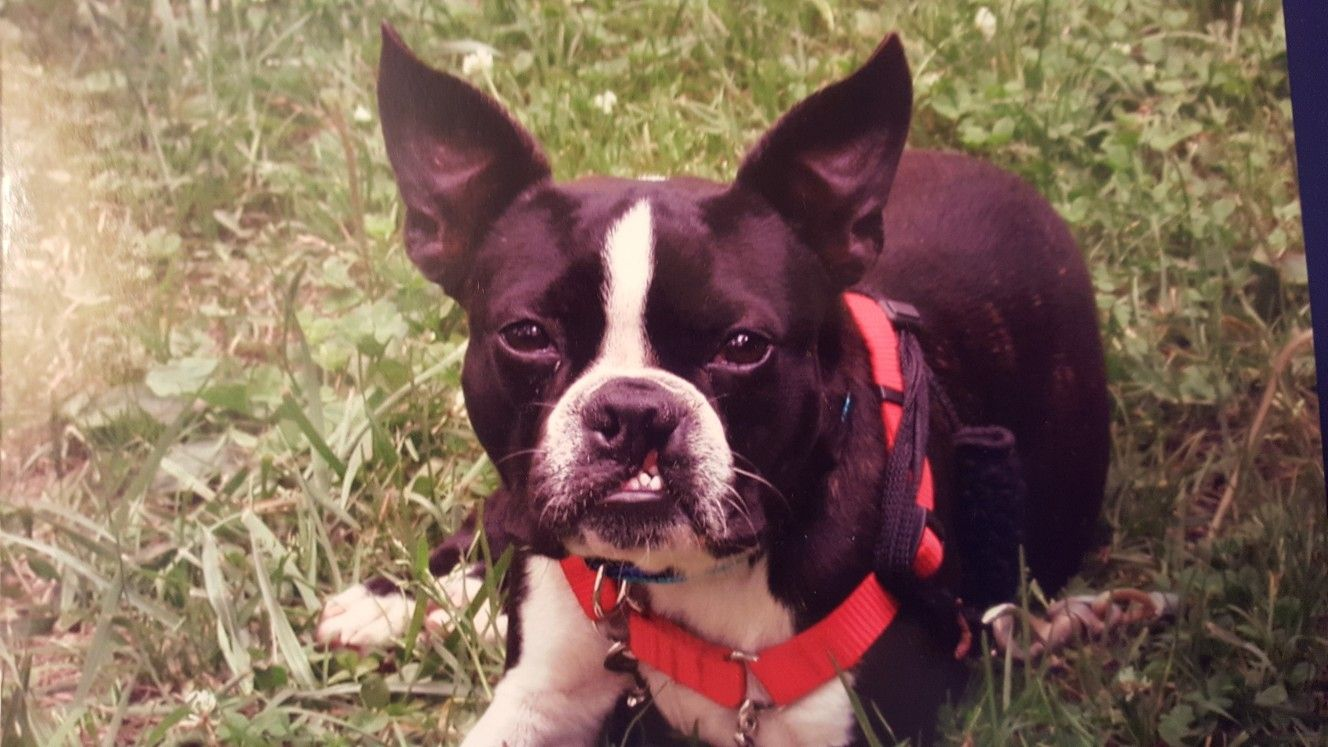 My Duke The Day I Rescued Him At 8 Months Old Cleft Palate But