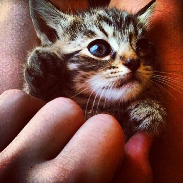 "Emergency Kittens on Twitter: ""Hello there Mr. Tiny! http://t.co/aviH03FMsl"""