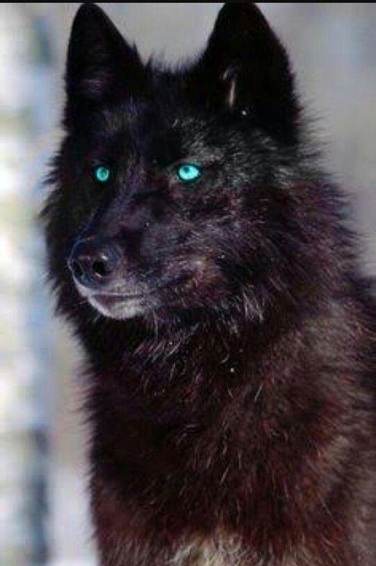 Pin De Willi En Wolf Lobos Animales Salvajes Fotos De Lobo