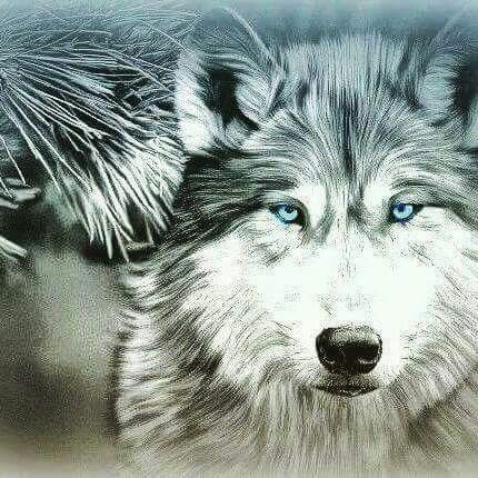 Luv this wolf