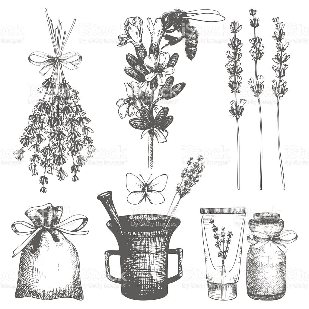 Vector Set Of Ink Hand Drawn Lavender Illustration In