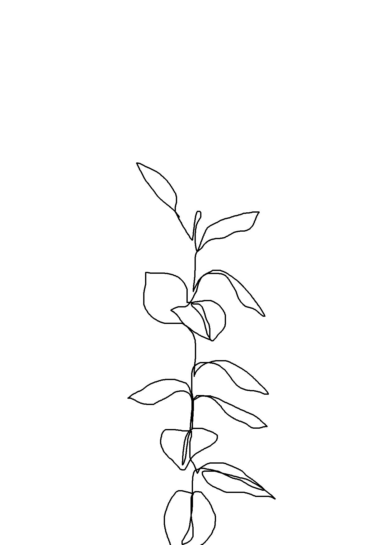 Single Line Drawing Flowers : One line minimal artwork plants and leaves minimalist