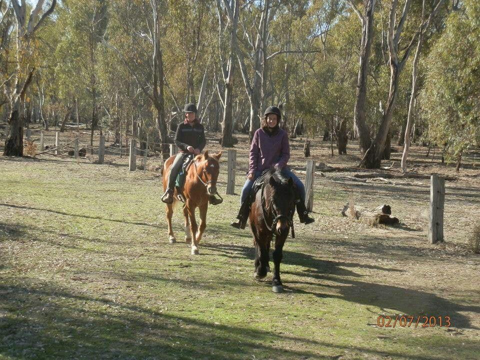 Riding At Barmah Horses Animals