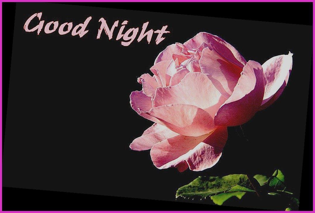 Good Night Flowers Hd Wallpaper Download Driveeapusedmotorhomefo On Isaidyeshub Com Good Night Image Good Night Flowers Good Night Images Hd