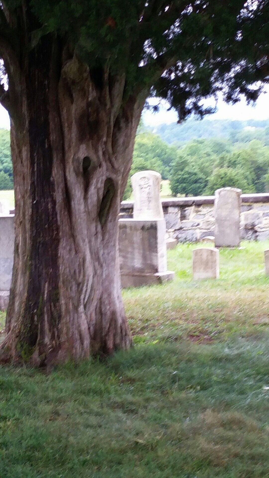 Ole tree in an Ole graveyard..kg