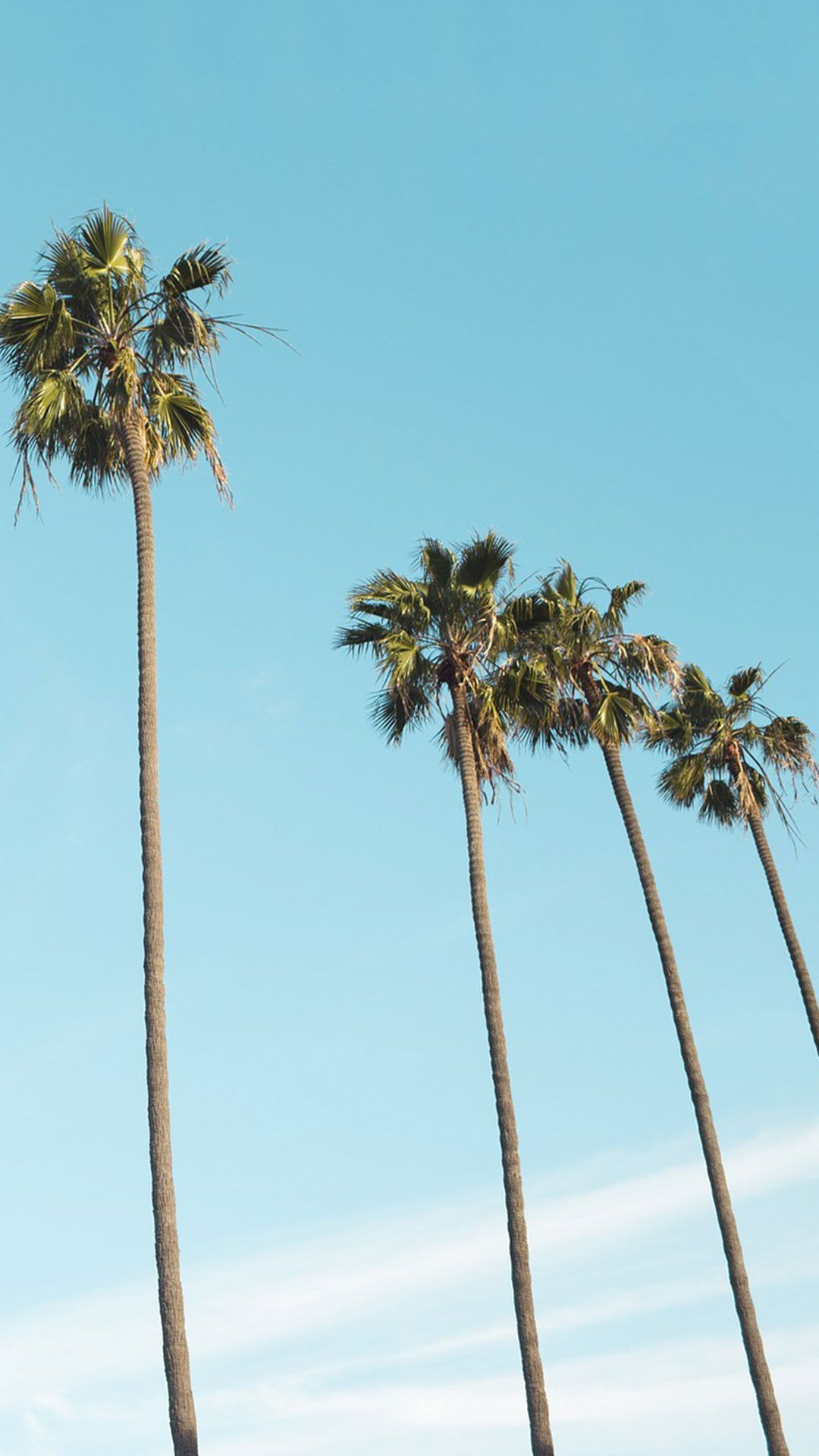 116 Free Beach Wallpapers For Your Phone Desktop Palm Trees Wallpaper Beach Wallpaper Tree Wallpaper Iphone