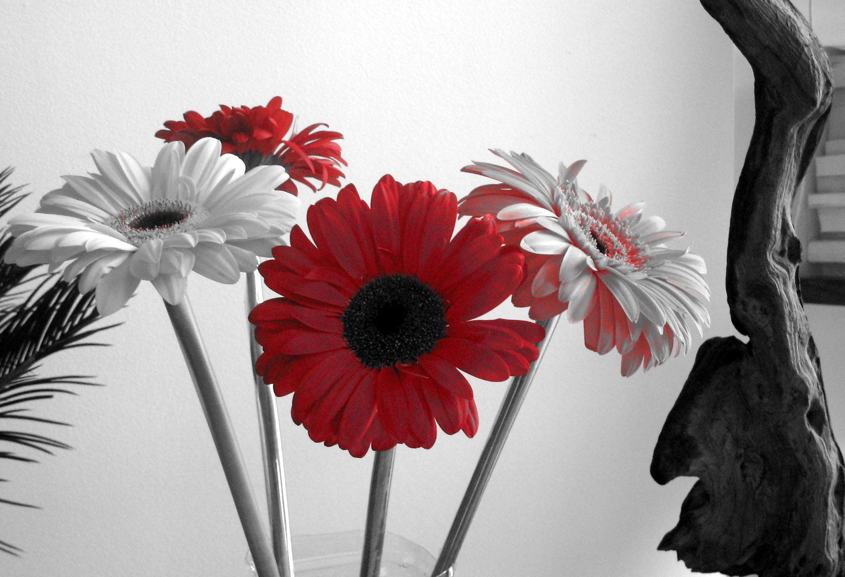 black red and white flower wallpaper wallpaper - Black And White Flowers