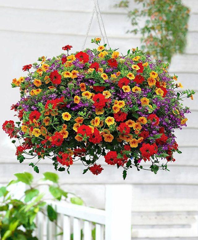 Las mejores plantas para cestas colgantes Plantas de rápido