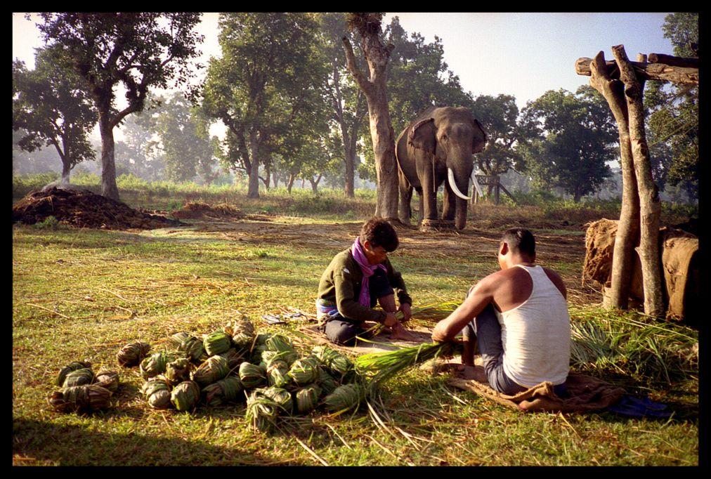 Chitwan, Nepal Nepal, Elephant food, World