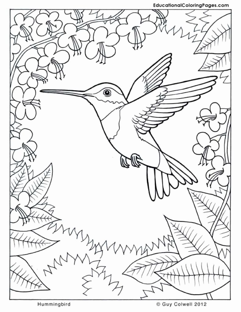 Animal Coloring Pages For Older Kids In 2020 Bird Coloring Pages Christmas Coloring Pages Peacock Coloring Pages
