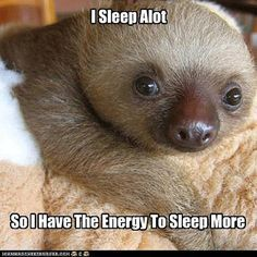 Sloth Logic Funny Pictures Baby Sloths My Life So True Funny