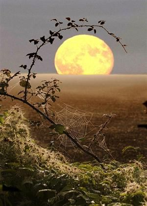 Spiderweb Moon, Fawler, England   photo via harvestheart