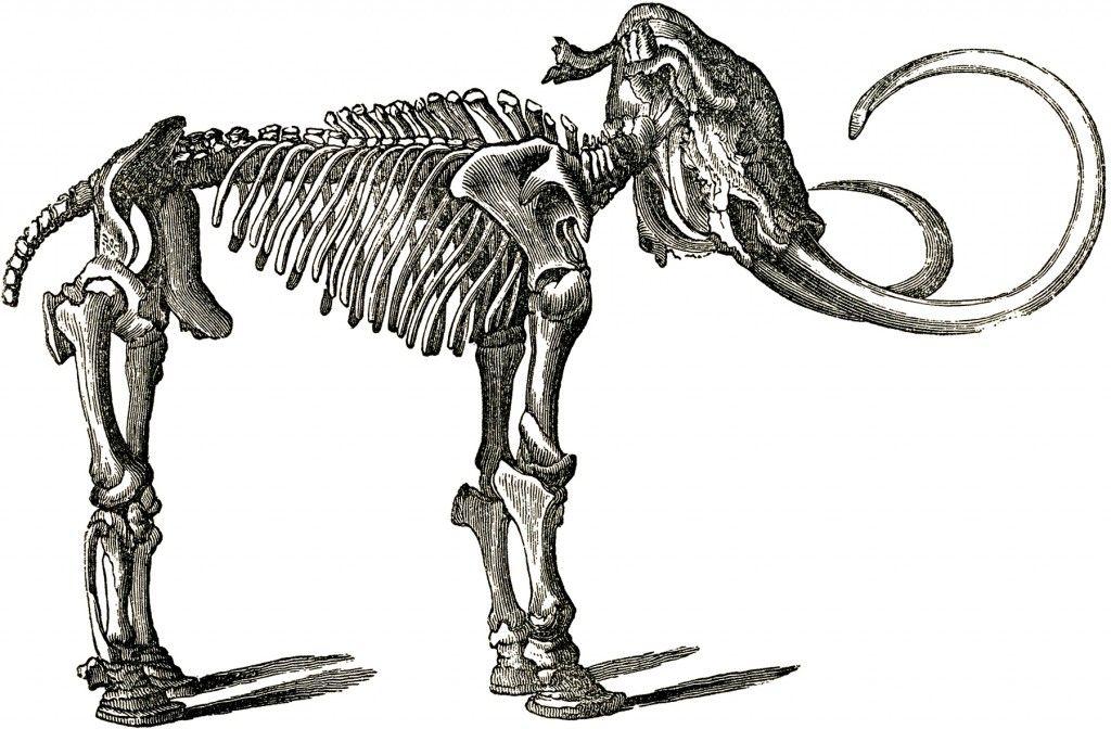 6 Dinosaur Clip Art Dinosaur Clip Art Bone Drawing Dinosaur Pictures
