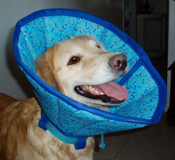 Tipos De Collares De Castigo Para Perros Pets Mascotas Collar Isabelino Bebederos Automaticos Para Perros