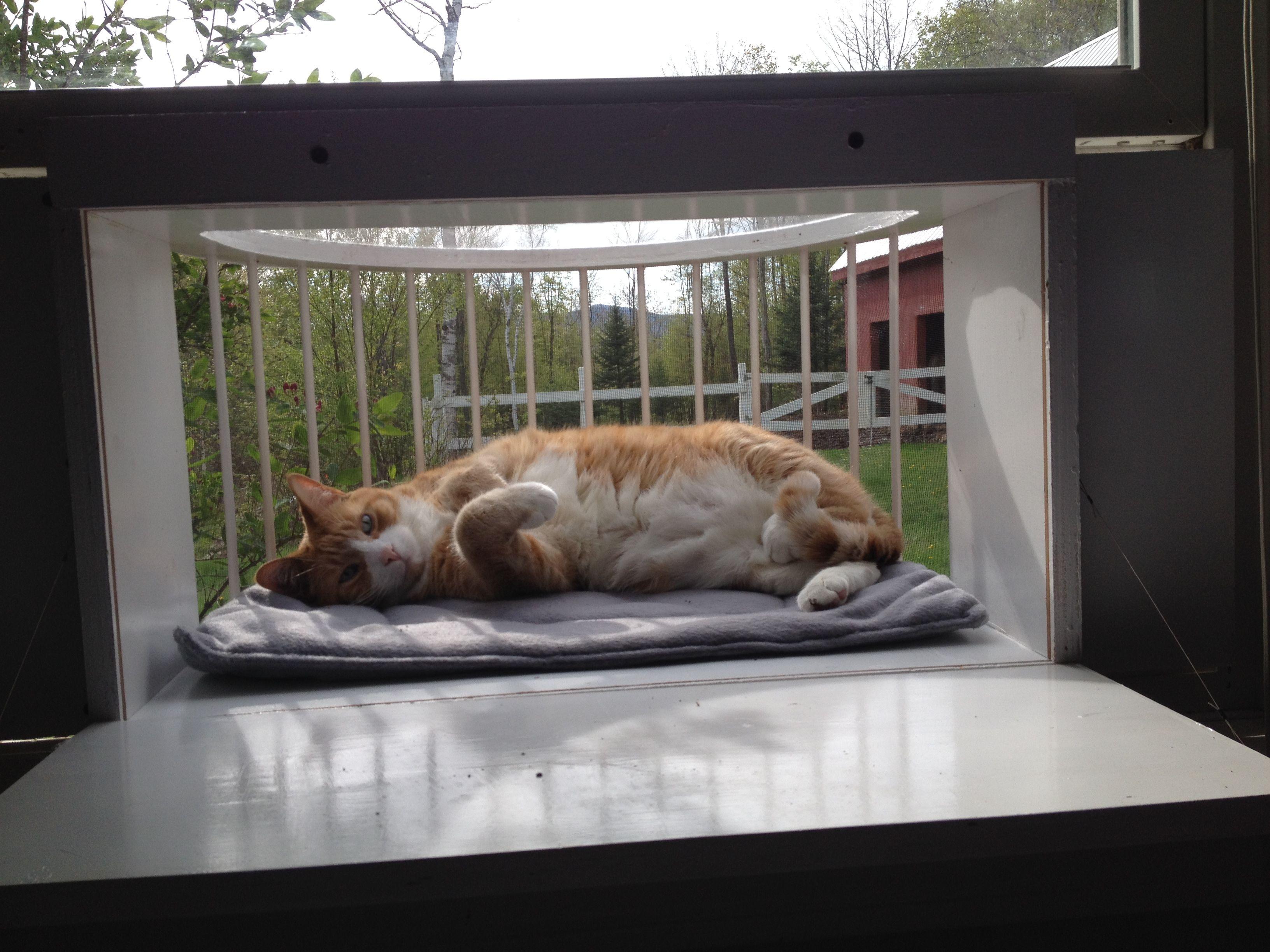 Cat Outdoor Window Enclosure