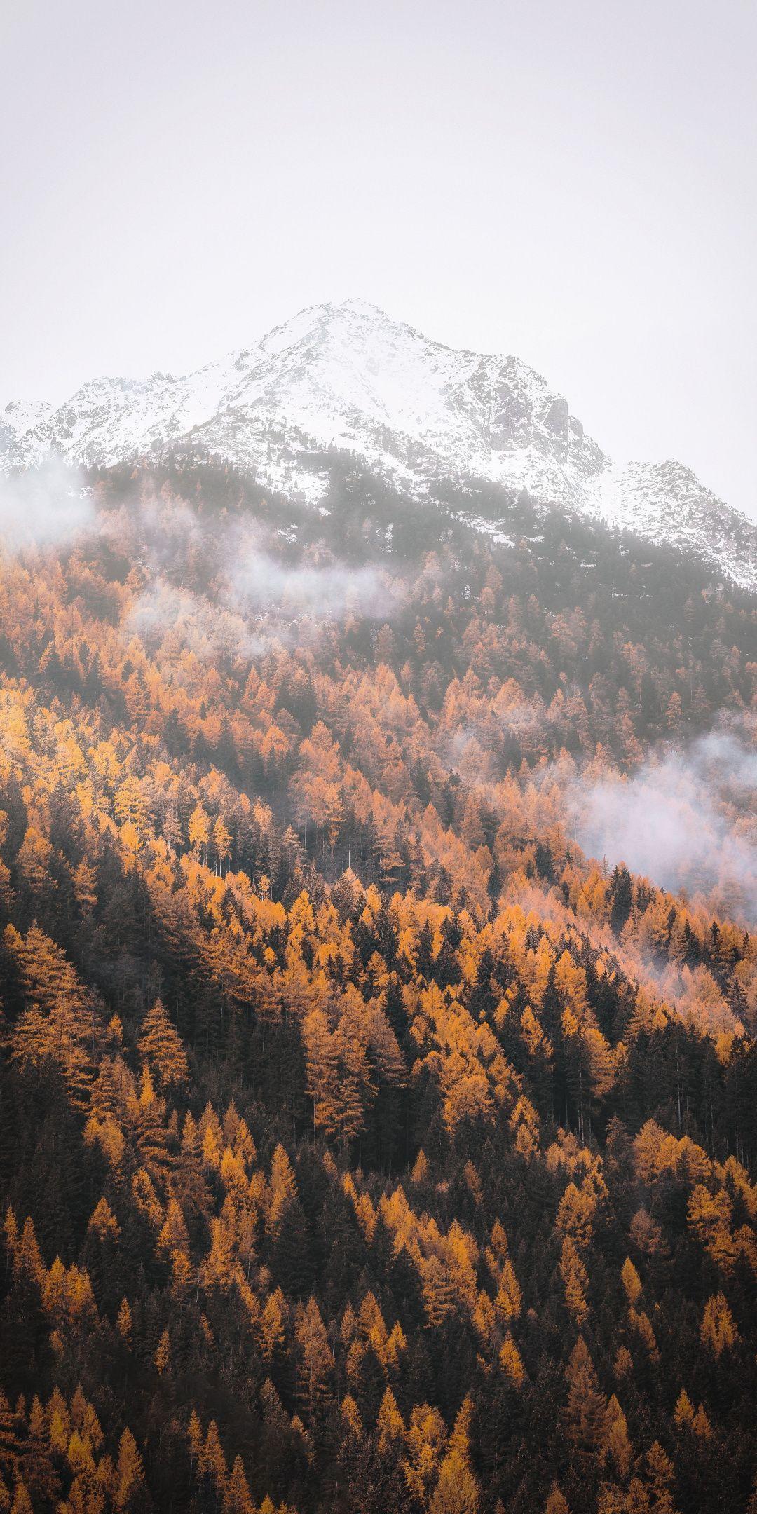 Autumn, forest, tree, yellow, mountains, 1080×2160