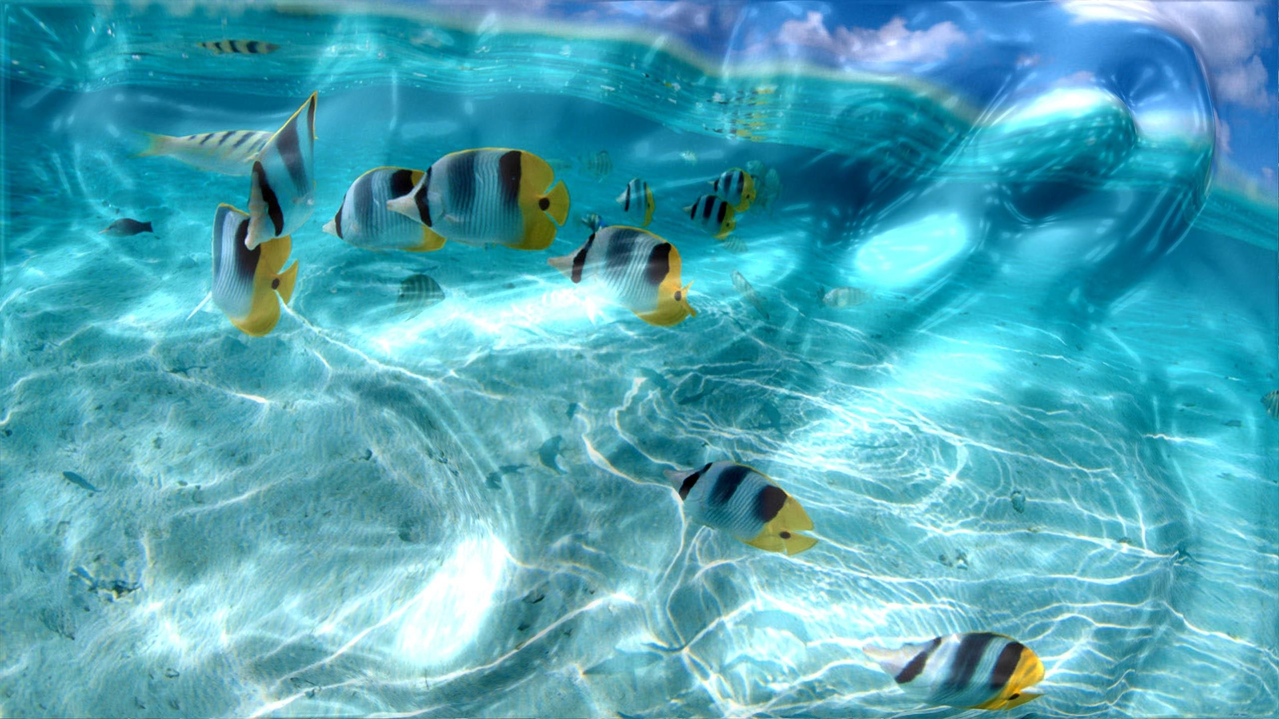 3d Pool Live Wallpaper For Pc Wallpaper Pc Free Live Wallpapers
